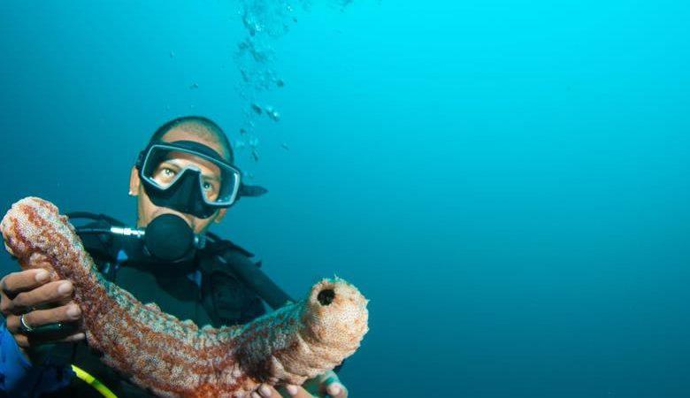 Diving near Trogir