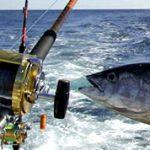 Bol (Brac) tuna fishing