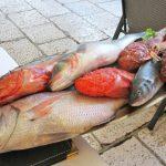 Brodetto fish