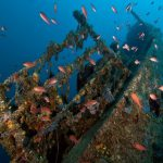 Taranto wreck diving