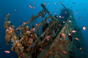 Taranto wreck diving