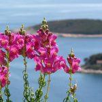 Pakleni Islands on Hvar