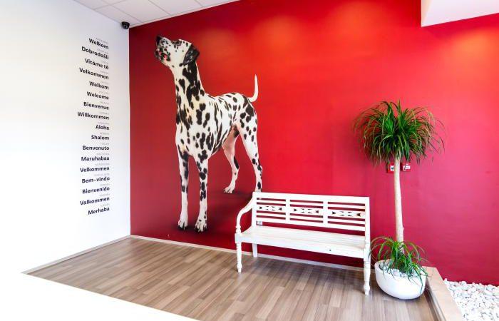 101 Dalmatian hostel front desk
