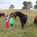 Wild horse safary in Livno