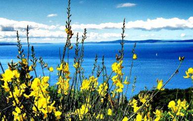 Spring flowers on Marjan Hill