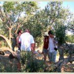 Olive tour on Solta island