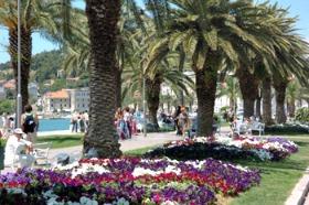 Flowers on Split Riva